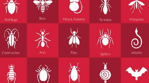 home pest chart